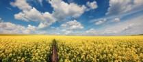Agriculteurs: les aides à la production d'espèces riches en protéines bientôt disponibles